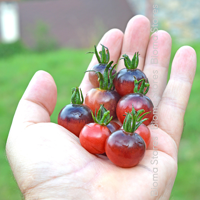 blu berry biomastores.gr 1