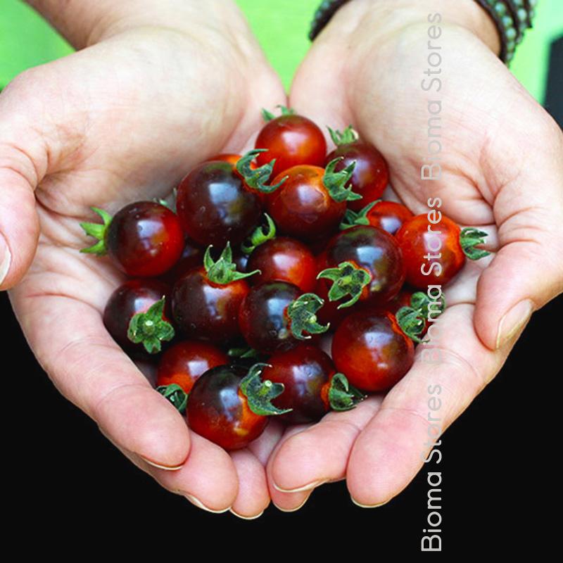 blu berry biomastores.gr 5