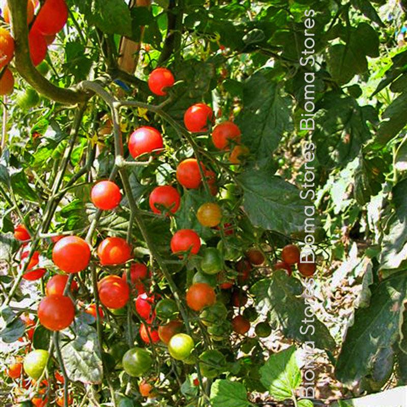 red cherry biomastores.gr 2