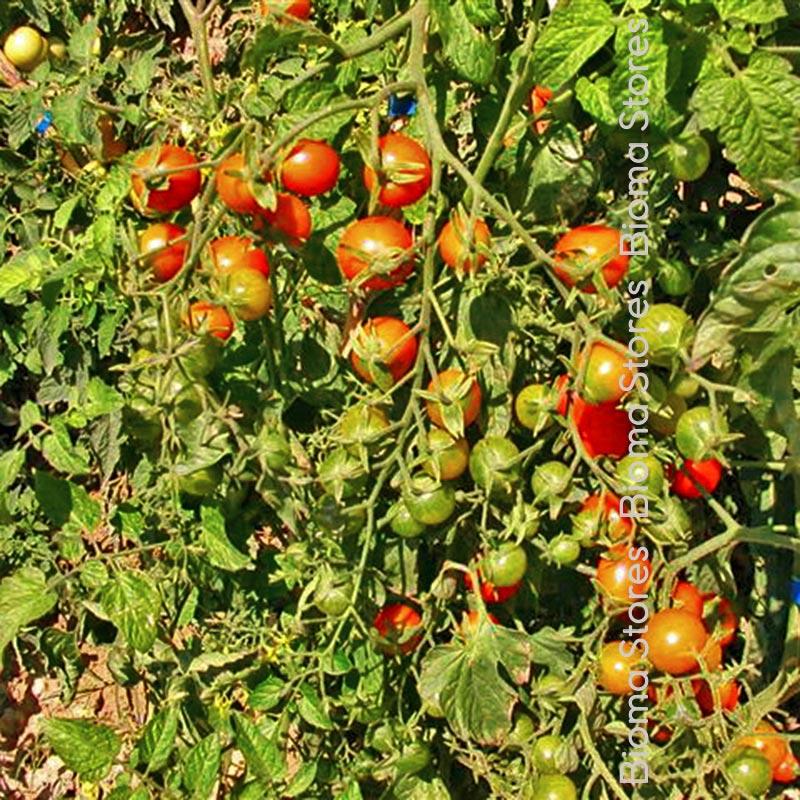 red cherry biomastores.gr 3
