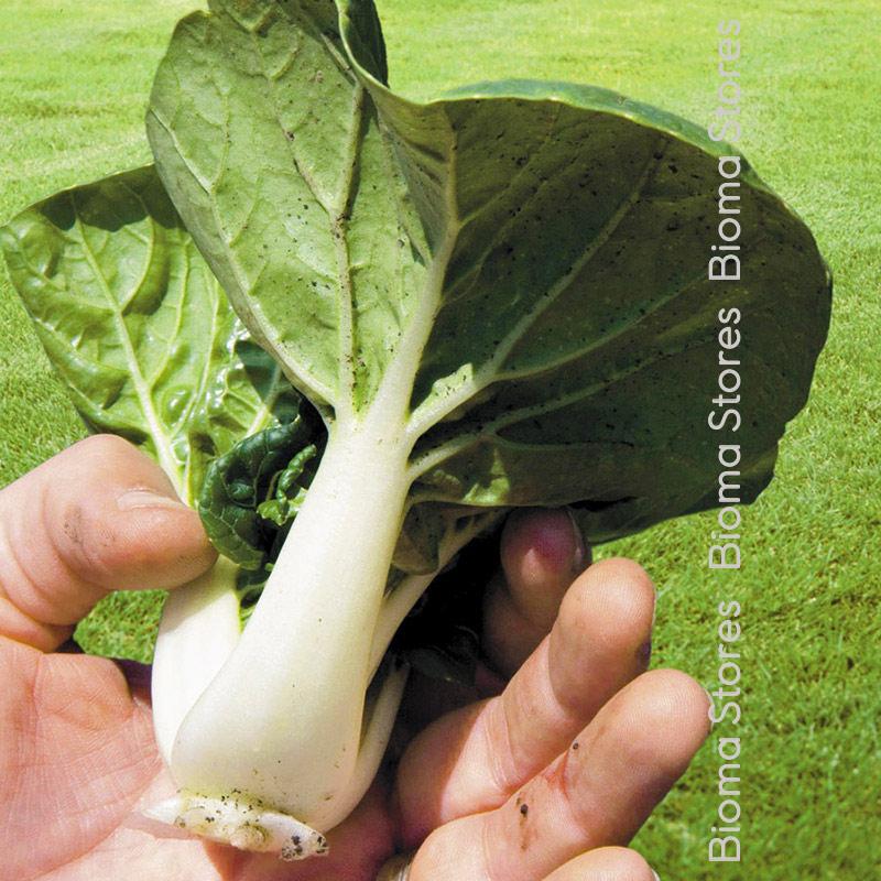 λάχανο pak choi biomastores.gr 3