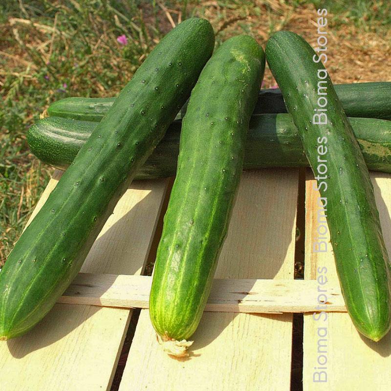 lungo verde biomastores.gr 2