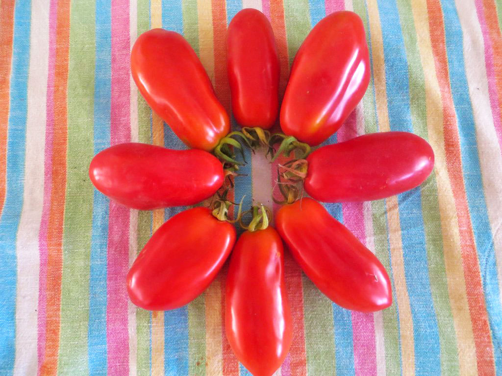 σπόροι τομάτας lungo san marzano biomastores.gr 2