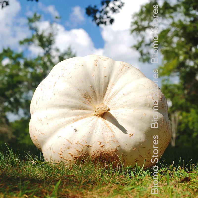 άσπρη biomastores.gr 1 1