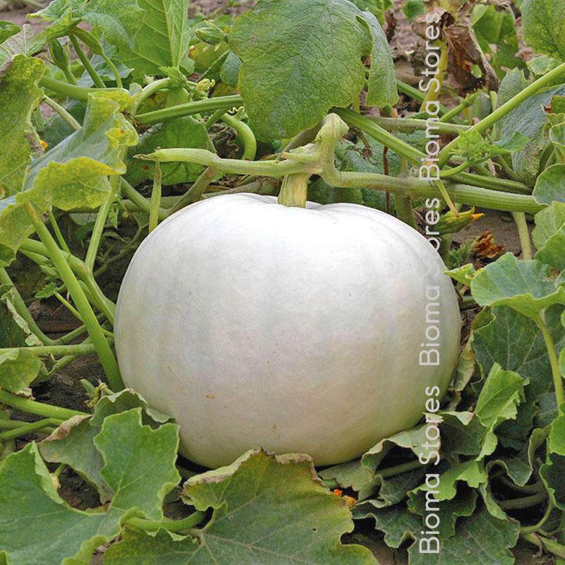 άσπρη biomastores.gr 2 1