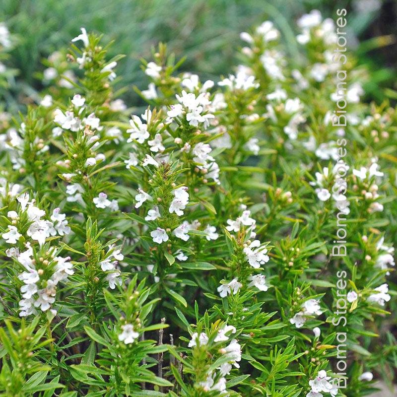 βότανα ορεινό θρούμπι biomastores.gr 2
