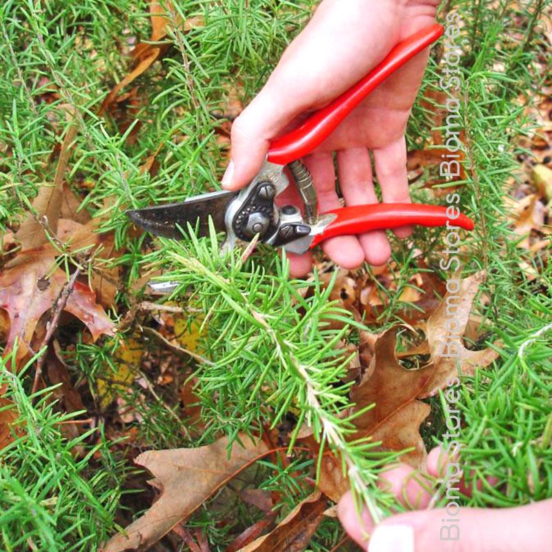 βοτανα δενδρολίβανο biomastores.gr 6