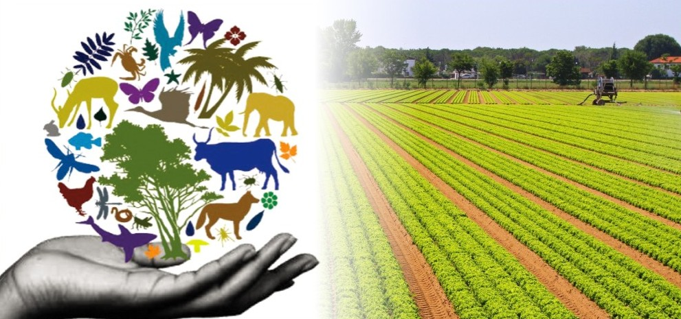 σημασία της γεωργικής ποικιλότητας biomastores.gr .1