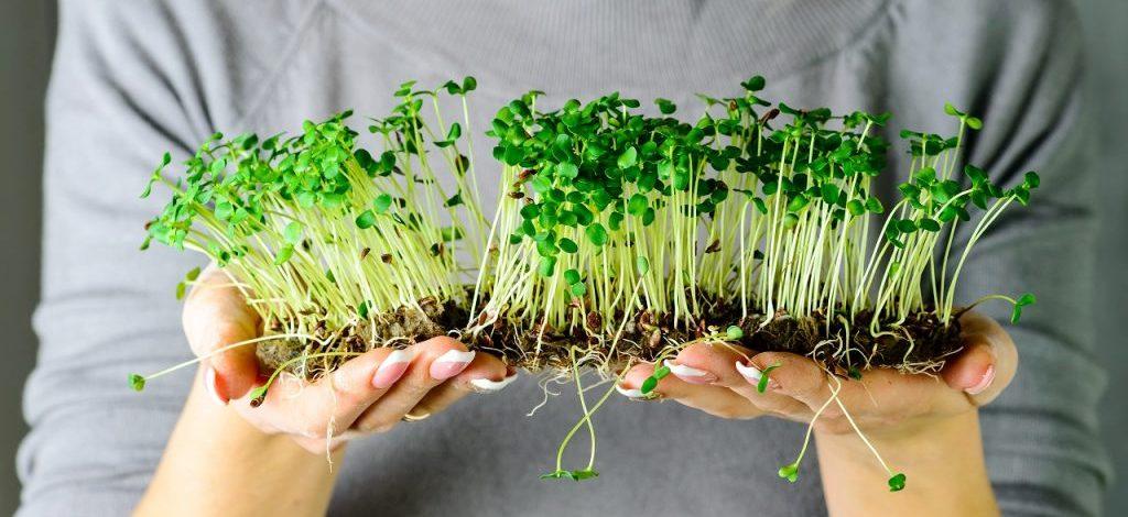 καλλιεργούμε φύτρες biomastores.gr 5