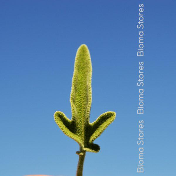 βότανα φασκόμηλο ελληνικο biomastores.gr 2