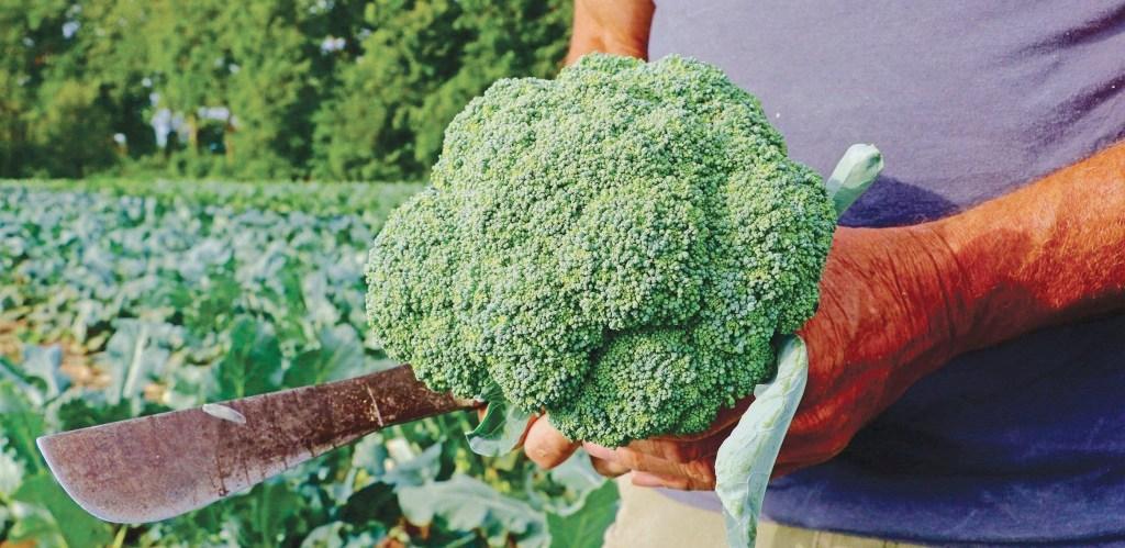 λίπανση στην βιολογική γεωργία biomastores.gr .