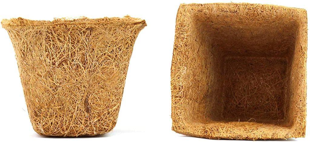 κοκκοφίνικα 3τεμχ6 θήκες biomastores.gr 1