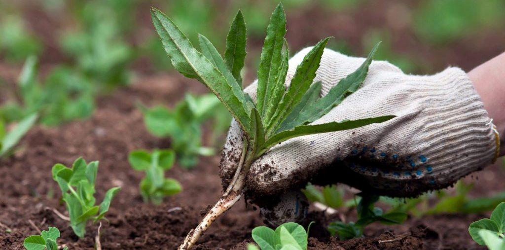να αντιμετωπίσετε τα αγριόχορτα χωρίς την χρήση χημικών biomastores.gr .