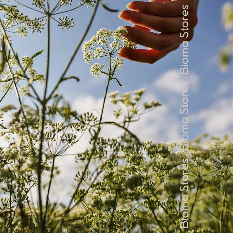 Γλυκάνισσου biomastores.gr 2