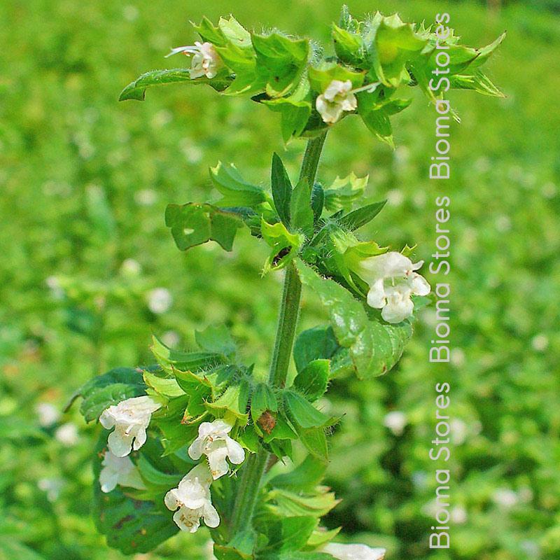 Μελισσόχορτου biomastores.gr 3