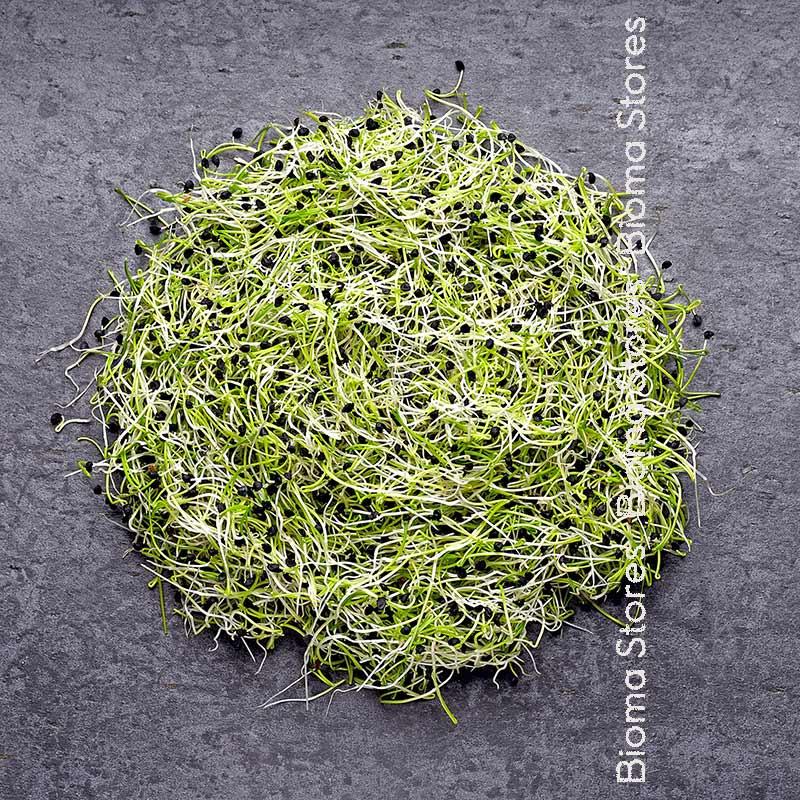 κρεμμυδιού biomastores.gr 1
