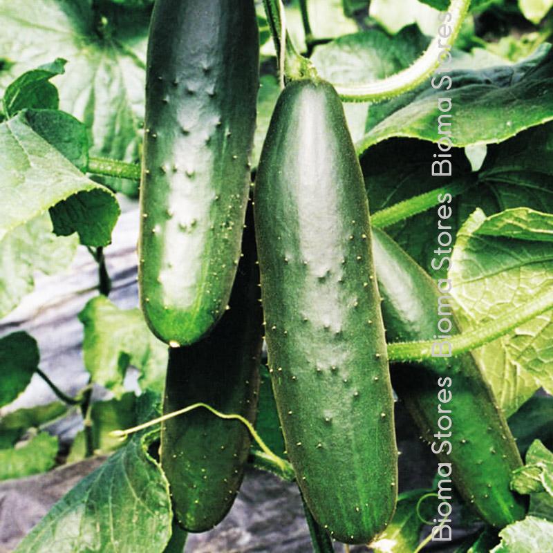 lungo verde biomastores.gr 3