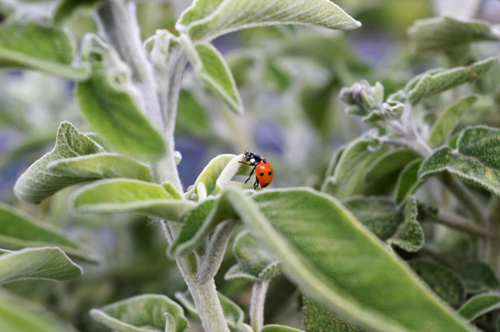 Βιολογικά Φυτά
