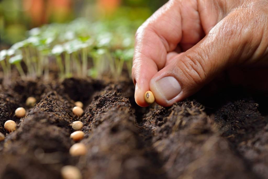 Βιολογικοί σπόροι για ερασιτέχνες