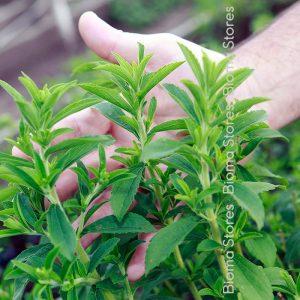 βότανα στεβια biomastores.gr 1