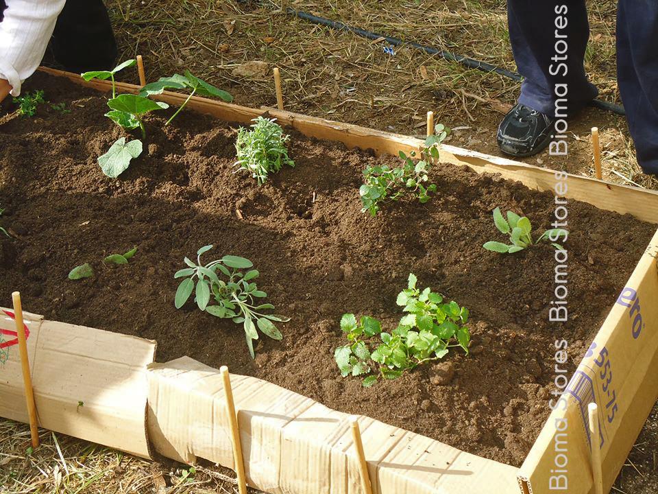 Σχολικός λαχανόκηπος